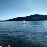 Juneau Whale Watch照片