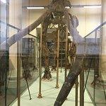 Museo Geologico Giovanni Capelliniの写真