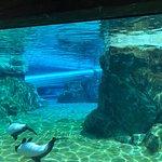 Photo of Aquatica Orlando