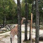 Foto de Southwick's Zoo