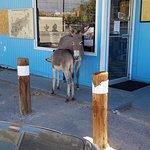 Wild burros outside Mel's Diner. Cute!