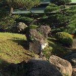 清澄庭园照片