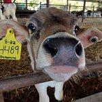 Bilde fra Calder's Dairy Farm