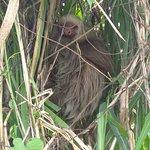 Photo of Jungle Tom Safaris Day Tours