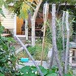 Rona's Courtyard & vegetable Garden