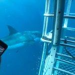 Zdjęcie Adventure Bay Charters