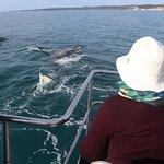 Foto van Quick Cat II - Hervey Bay Whale Watch