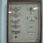 Foto de Seychelles Natural History Museum