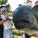 Сам динозавр