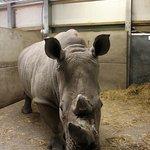 Rhino in house