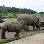 Rhino and Baby Rhino outside house