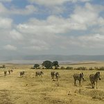 Time to explore the wildlife in ngorongoro crater