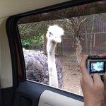 Valokuva: Harmony Park Safari