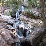 Foto de Reserva Nacional Río Los Cipreses