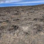 Burnt hillside of Trees of Stone Interpretive Trail.