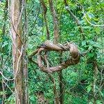 タビン野生生物保護区の写真