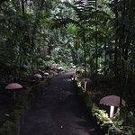 Foto de Ecotermales Fortuna