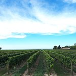 Bilde fra Niagara Wine Tour Guides