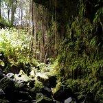 Foto de Kaumana Caves Park