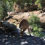 Bilde fra Samaria Gorge National Park