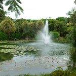Фотография Gardens by the Bay
