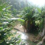 ภาพถ่ายของ Penang Botanical Gardens