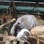 Fotografie: Zoo Santo Inácio