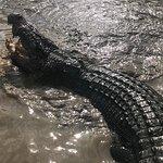 Jumping Crocodile Cruises照片