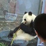神户市立王子动物园照片