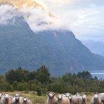 Las ovejas curiosas con nuestra llegada al camping!