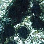 Sea urchins on the rocks