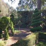 荷花園照片