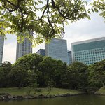 Hama rikyu gardens - urban oasis