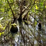Foto de Corkscrew Swamp Sanctuary