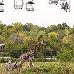 The cable car ride ($5 extra) offers a nice view of the bigger zoo animals.
