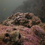 Foto de Al Boom Diving