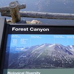 Forest Canyon Overlook의 사진