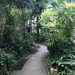 صورة فوتوغرافية لـ Krohn Conservatory