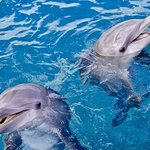 Get up close to dolphins on this fantastic 9-hour snorkel trip from Hurghada. Enjoy a boat cruis