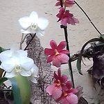 Foto Jardin de Orquideas de Sitio Litre