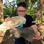 Andy Howeys Birds of Prey Centre – obrázok