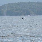 Billede af Archipelago Wildlife Cruises