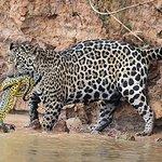 Φωτογραφία: Gasparetour Pantanal Tours