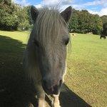 Φωτογραφία: Miniature Pony Centre