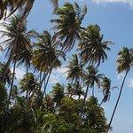 Foto de Ilha de Boipeba