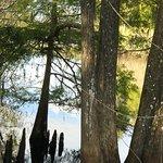 Foto van Lettuce Lake Regional Park