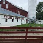 Zdjęcie Young's Jersey Dairy Farm