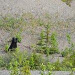 Bear along the way