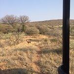 Mokolodi Nature Reserve