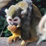 Aren't I cute (Macaque)